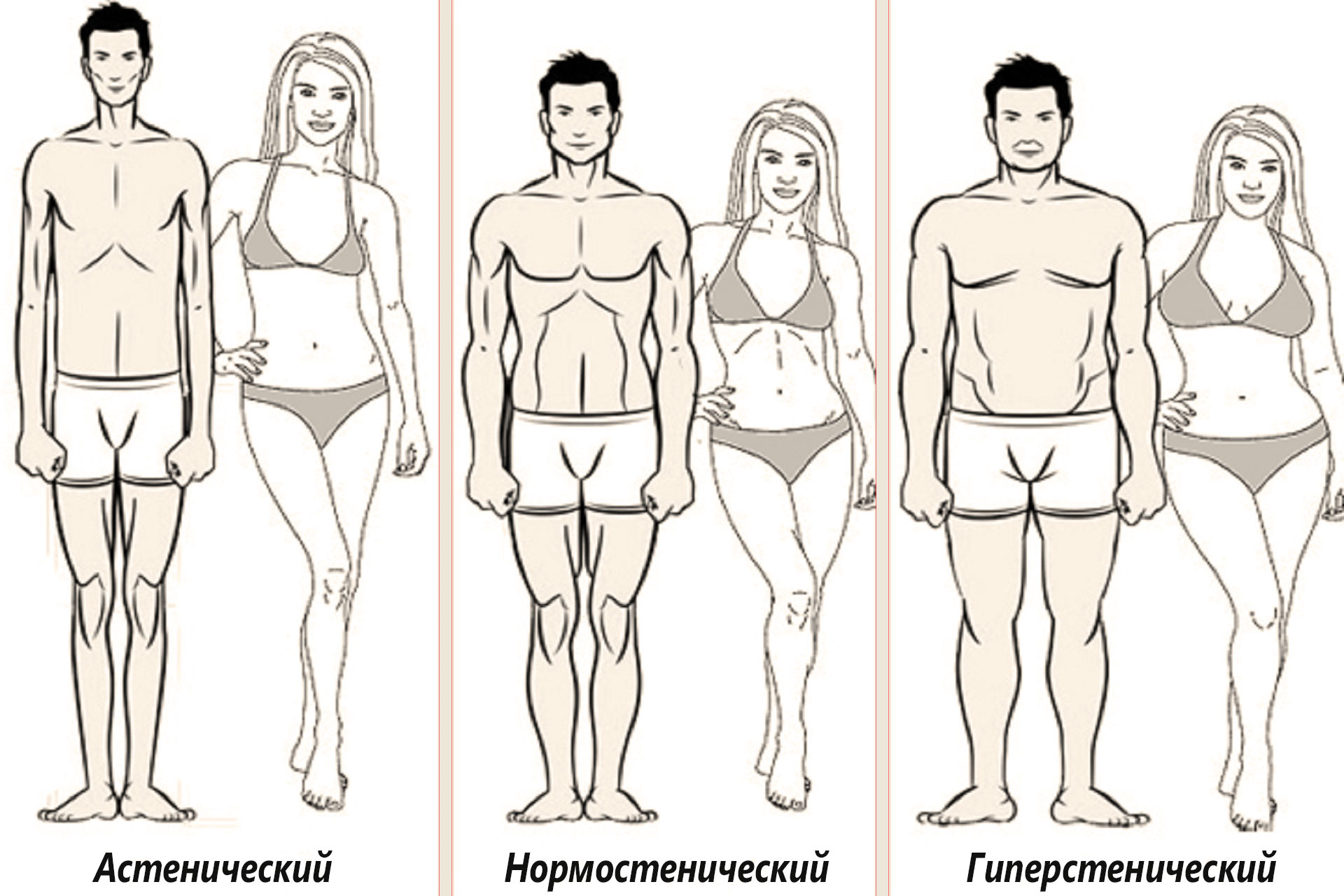 Три типа телосложени